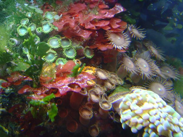 More Corals and Algaes